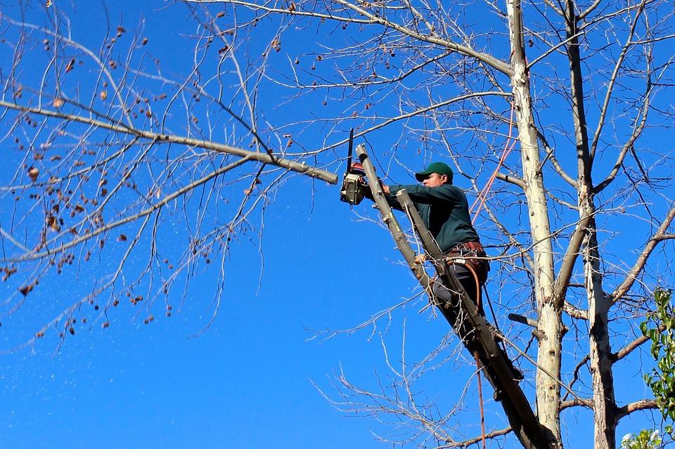 Pour l'élagage de vos arbres, rien ne vaut la technique d'un professionnel 1