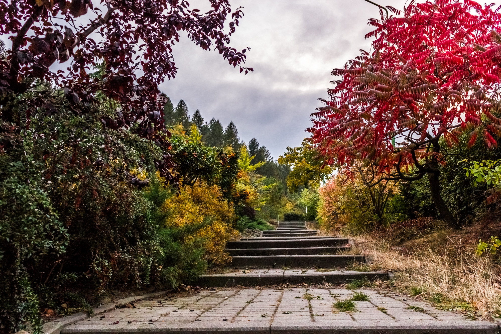 Disposez d'un harmonieux jardin avec votre paysagiste 3