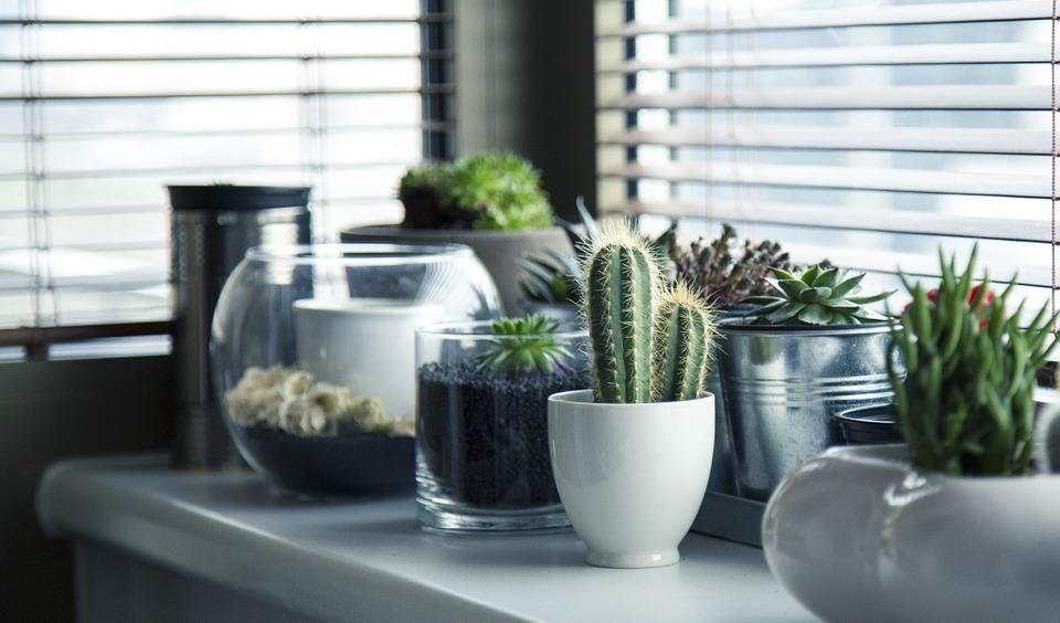 Rendez-vous dans une jardinerie pour trouver vos plantes d'intérieur 2