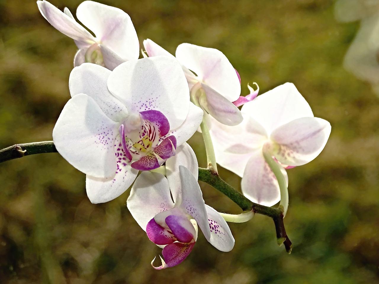 Bien choisir son orchidée 1
