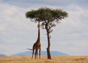S'évader au Kenya au cours d'un voyage de noces en Afrique 1
